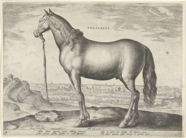 thessalian horse
